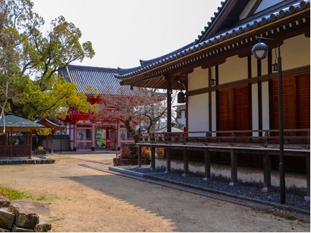 精進料理体験が出来る寺院の写真